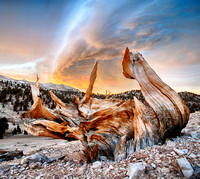 Edward August Photography-San Francisco Bay Area Photographer, landscape, sunset, clouds, trees, bristlecone pine, bristlecone, Eastern Sierras,
